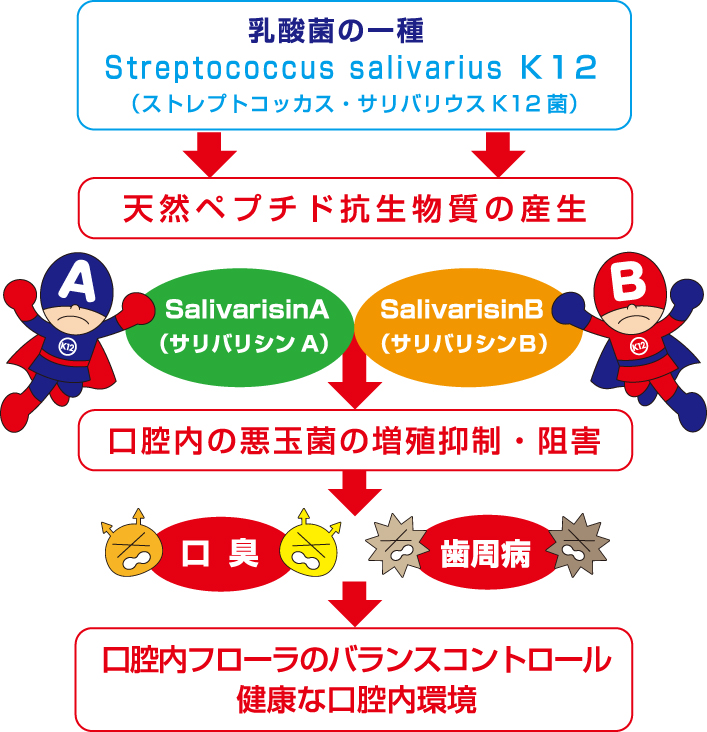 K12の作用